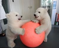 """Le jeu """"Que pourrait bien dire ..."""" n°05 : Ces deux oursons Blancs ?"""