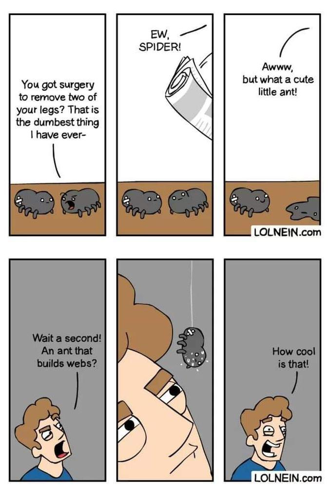 - Tu t'es faite opérée pour enlever deux pattes ? C'est le truc le plus con que j'ai jamais... - Haaaa, une araignée ! Hoooo, une jolie petite fourmi !  - Une minute... Une fourmi qui tisse une toile ? C'est super cool !