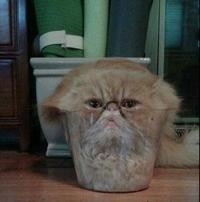 Un chat dans un verre
