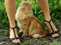 Chat pervers