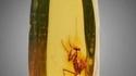 Une mante religieuse figée dans de l'ambre...