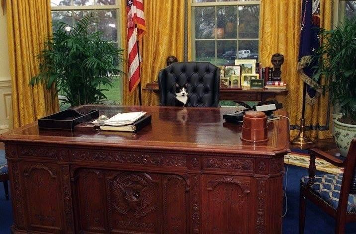 Dans le bureau ovale: un chat président
