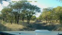 Où va l'antilope ?