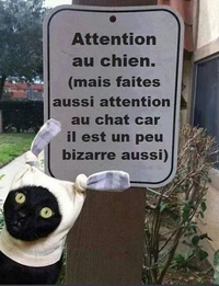 Attention au Mylo!!