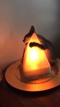 Le chat et la lumière