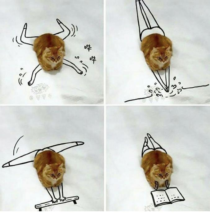 Pour un chat.