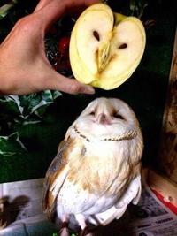 Chouette une pomme