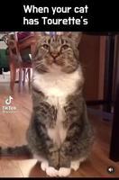 Quand ton chat à le syndrome de Gilles de la Tourette