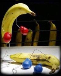 Combat de bananes