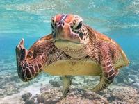 Je suis une tortue et je t'emmerde