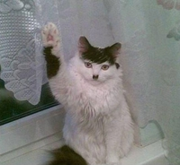 Mein Kat