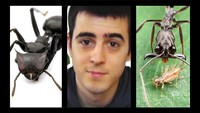 7 types de fourmis incroyables