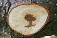 Un arbre dans un arbre