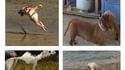 Photos panoramiques de chiens