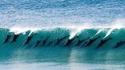 Les meilleurs surfers du monde (dixit Sea Shepherd)