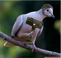 Radar oiseau
