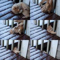 Dure vie de chat