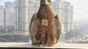 Selfie au faucon