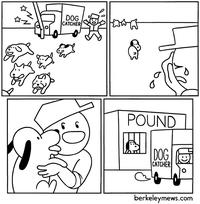Le gentil petit chien