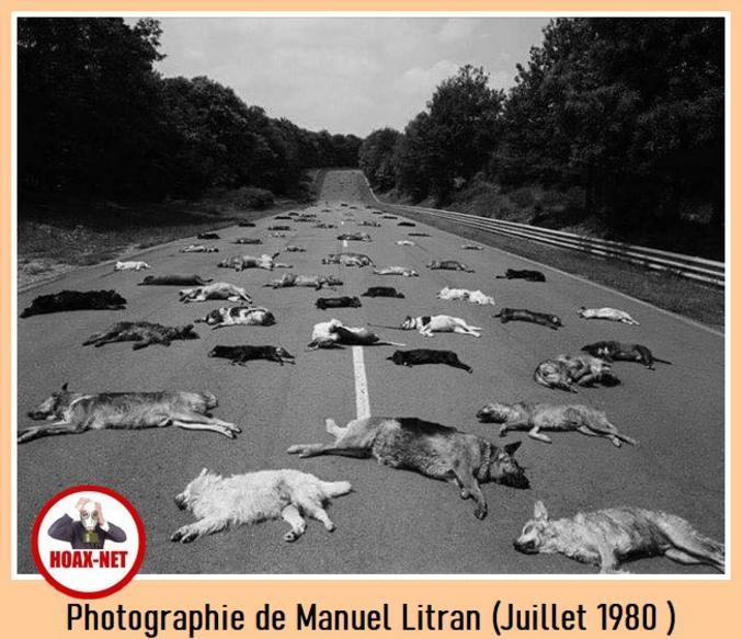 Photographie de Manuel Litran prise en Juillet 1980.  Tous ces chiens ont du être euthanasier par la SPA car abandonnés par leurs propriétaires.  Chaque année, c'est triste.  Petit message pour les gros bâtards qui font ça.