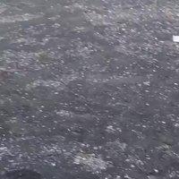 Gobéland