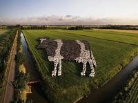 La vache dans le pré