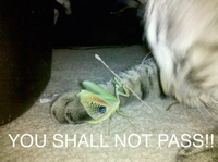 You shall not pass ! 5