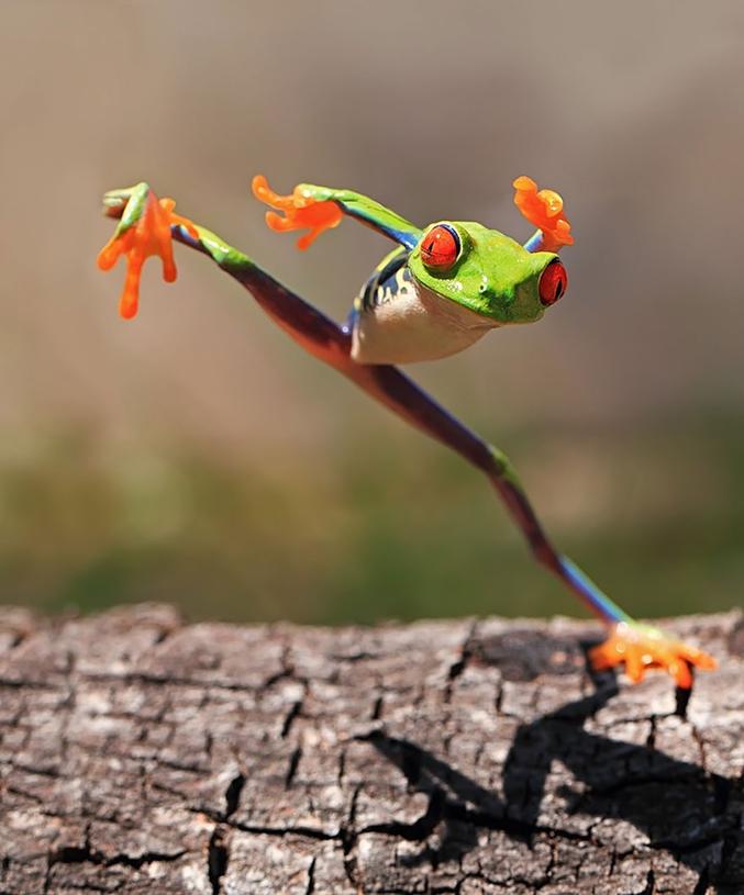 Le kung-fu de la grenouille.