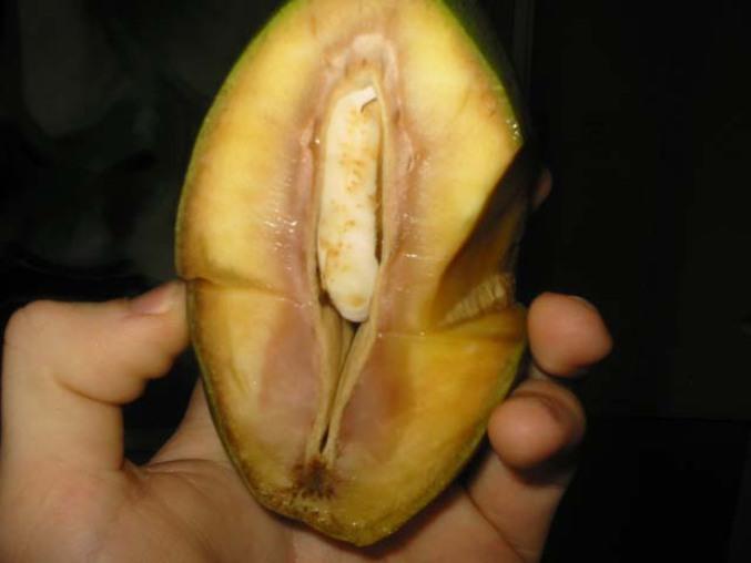 Un fruit à l'aspect... étrange