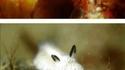 Le lapin de mer