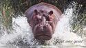 Les hippos surpassent les humains en vitesse à la course et en natation