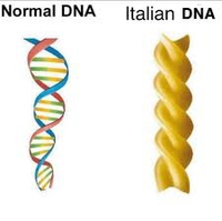 À gauche, un ADN normal, à droite, celui d'un Italien