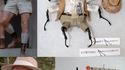Des insectes déguisés en personnages de Jurassik Park