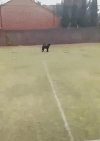 Dog fail