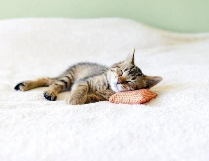 Pour mini-chat.