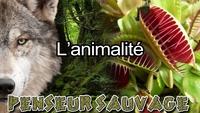 Une vidéo sur l'animalité