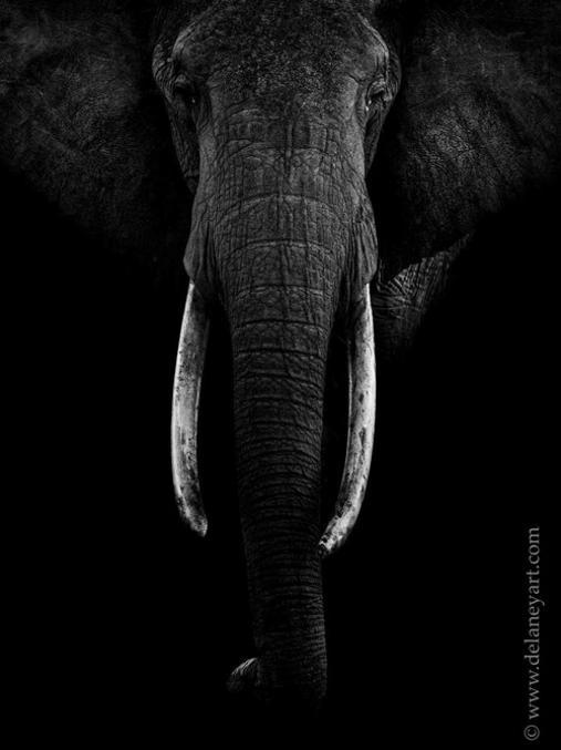Une vision en noir et blanc de la vie sauvage Photographe : https://peterdelaneyphotography.com/black-and-white-wildlife-photos