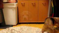 Un chien attrape la balle avec ses pattes