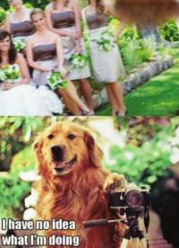 Un chien prend une photo