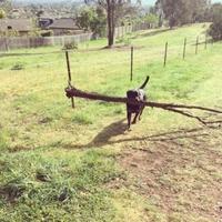 Quand ton chien ne veut pas faire le petit