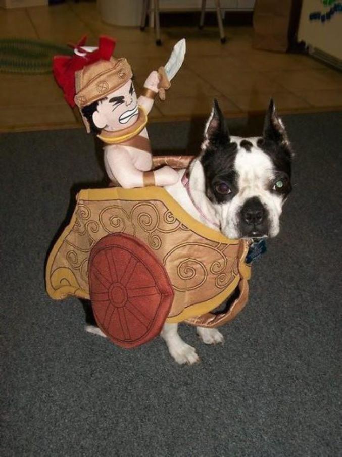 D guisement pour animaux - Deguisement halloween chien ...
