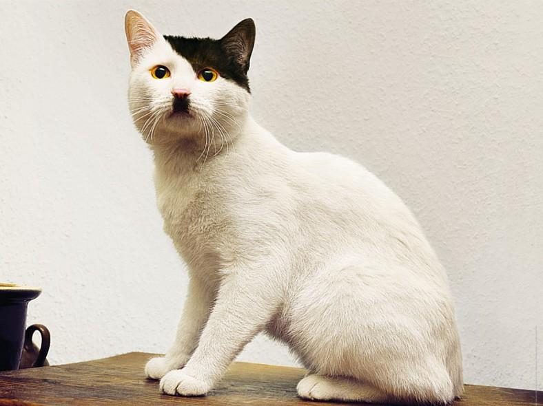 Encore un chat qui ressemble hitler for Oui non minimaliste