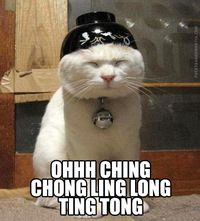 Chat chinois