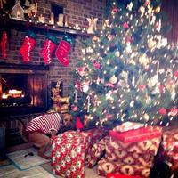 Il n'y a pas que des cadeaux déposés sous le sapin...