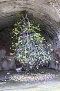 Racines ou arbre inversé ?