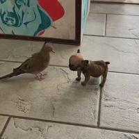 Le respect, c'est définitivement pas pour les petits chiens