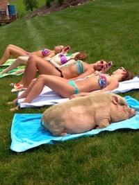 5 cochonnes au soleil