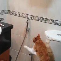 Un chat arrosé