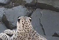 Le léopard et la caméra