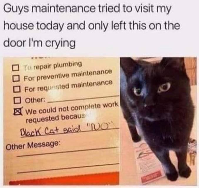 Travaux non effectués, motif: le chat noir a dit non.